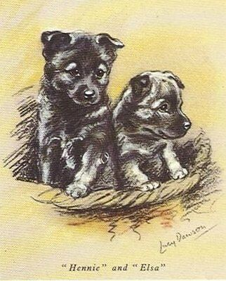 Norwegian Elkhound Puppy - MATTED Dog Print - Lucy Dawson