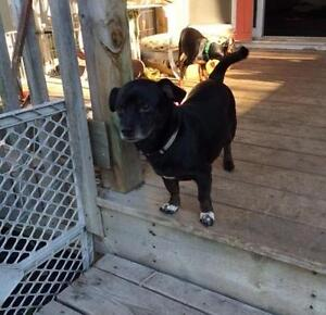 """Adult Male Dog - Terrier: """"Casey - ready for love!"""""""