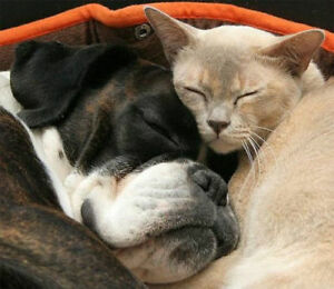 Pet Sitting by The Pet Nanny, Licensed Professional Pet Care