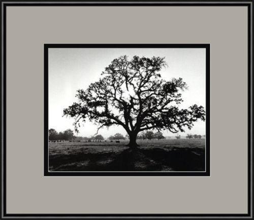 Black And White Tree Art Ebay