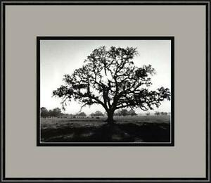 Black And White Tree Art