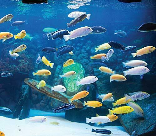 10 pack of African Cichlids for fish tank aquarium
