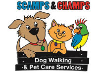 Reliable dog walkers wanted for Hampstead/Cricklewood/Finchley areas