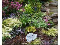 GARDEN PLANTS & SHRUBS (FREE COLLECTION)
