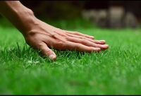 NW Professional & Affordable Lawn Care - Mowing, Aeration, &More