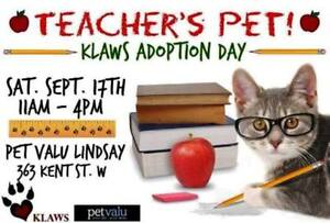 KLAWS Adoptathon Sept 17th 11-4 PM. Drop in & meet our rescues!