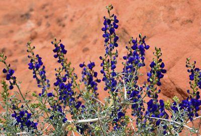 4 oz Candle Scent Oil-DESERT (Desert Sage Fragrance Oil)