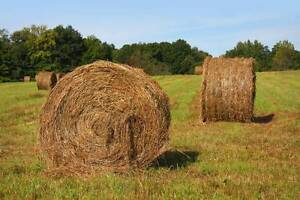 Hay for Sale (Round Bales)