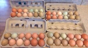 Heritage Mix Hatching Eggs