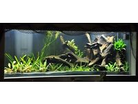Set of Tropical Fish + 4 Kind Live Plants Free