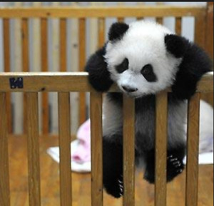 Refer to the home as a Panda