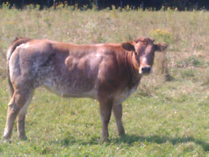 Pasture wanted Mildmay and area