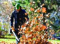 AYS LANDSCAPING - LEAF REMOVAL/ YARD CLEANUP/ LAWN MAINTENANCE