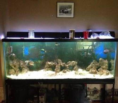 150 Gallon Aquarium Fish Tank Ebay