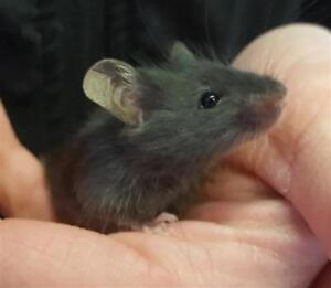 """Baby Male Small & Furry - Mouse: """"Mr. Jingles"""""""