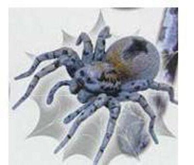 Toxic Arachnids Spider Lycosa Tarantula Wolf Spider