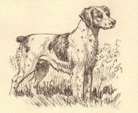 Brittany Spaniel - Vintage Dog Print - 1954 Megargee