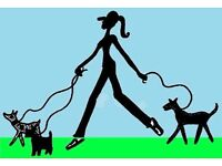 Happy Tails Dog Walker Cookstown