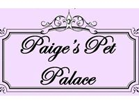 Paige's Pet Palace Small animal boarding