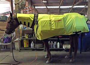 Equine Thermotex Therapy sessions