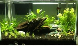 ISO- natural looking aquarium decor at reasonable price
