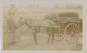 Wilts-PORTON-C-Trowbridge-Family-Butcher-Horse-Cart-RP-PPC