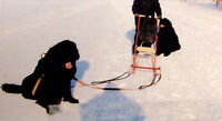 Fun Winter Dog Sled - Great For Families