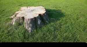 Quality Stump Removal Service