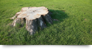 Professional Tree Stump Removal Service