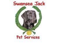 Dog Walker / Pet sitter home visits by Swansea Jacks