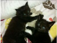 ****CUTE KITTENS**** COLLECT TODAY