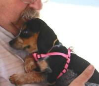 "Baby Female Dog - Beagle: ""BETHANY"""