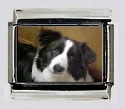 BORDER COLLIE dog 9mm photo Italian charms links for modular style bracelets