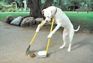 Pet Waste Removal / Yard Cleaning
