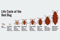 Bed Bugs Mice,Rats Control