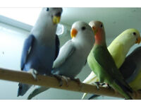UV light suitable for indoor Shed aviary