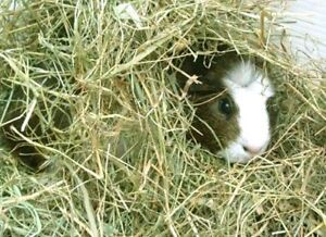 FOIN POUR LAPINS/RONGEURS - HAY FOR RABBITS/RODENTS