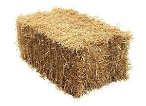 Straw-Small Square Bales Stratford Kitchener Area image 1