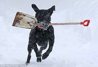 *Snow Removal* Sign-Up Today! $80/Month. ~> Call Us A.S.A.P! =).