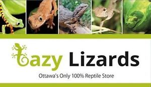 Lazy Lizards - Ottawa's Only 100% Reptile Store