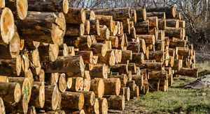 Land for small sawmill business