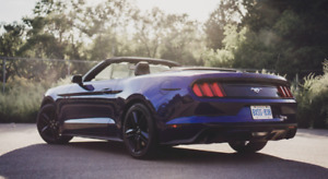 Looking for Ford a Mustang GT / Convertible 2011 - 2017 Model