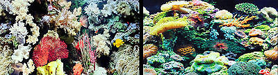 "Marina Aquarium Fish Tank Background by the foot 12"" tall, Two-sided. WORLDWIDE"