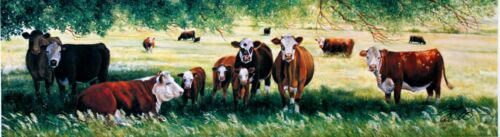 Small Hereford Cattle Cows Summer Pastures Art Print Landscape Picture tonisart