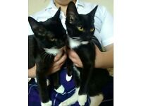 2 male cats