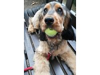 Hackney Wick, Hackney & Homerton Dog Walker/ Dog Sitter/ Doggy Day Care/ Holiday Dog Boarding