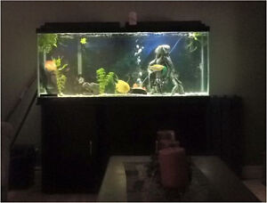 50 gallon fish tank