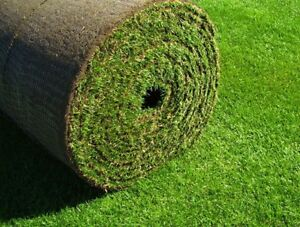 Looking for: Sod