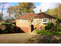 Beautiful 3 bedroom bungalow to rent in Haslemere