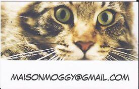 MAISON MOGGY Cat SItter